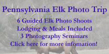 Pennsylvania Elk Photography Experience Photo Trip